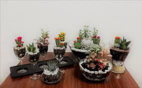 decorative indoor plants terrarium big and small dubai uae