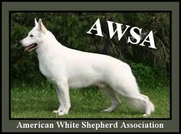 belgian sheepdog vs belgian malinois berger blanc suisse vs white german shepherd vs white shepherd