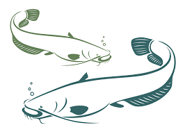 realistic catfish clipart cliparts and others art inspiration