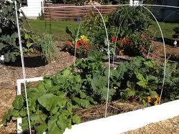 winter gardening laura bruno u0027s blog page 2