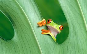free green frog wallpaper 2560x1600 13104