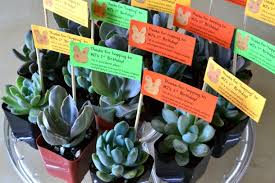 Birthday Favor by Mj S 1st Birthday Favors The Republic Of Succulents