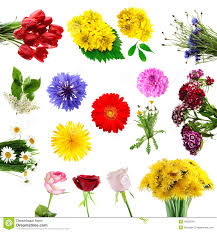 collection of summer flowers royalty free stock images image