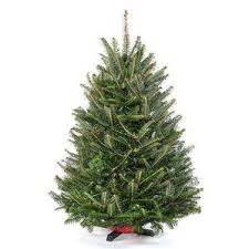real christmas trees delivered wayfair