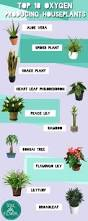top 10 oxygen producing houseplants houseplants plants and gardens