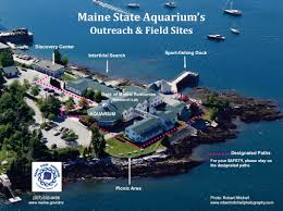 maine state aquarium maine department of marine resources