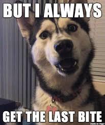 Siberian Husky Meme - new meme in response to yuka the 18 month old siberian husky meme