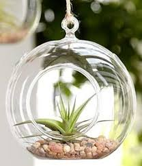 hanging glass hydroponic flowers planter vase terrarium container
