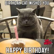 Naughty Birthday Memes - funny cat happy birthday meme cat best of the funny meme