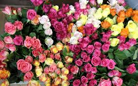 Colorful Roses Colorful Roses Flowers Wallpaper 7699 1920 X 1200 Wallpaperlayer Com