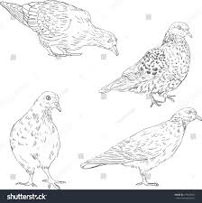set linear drawing doves hand drawn stock vector 178245851