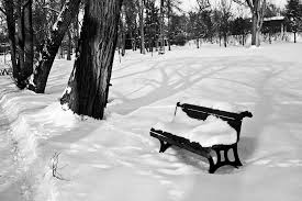 free photo winter park white snowy benches free image on