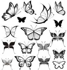 butterfly vector images 53 000
