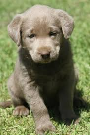 reserving puppy