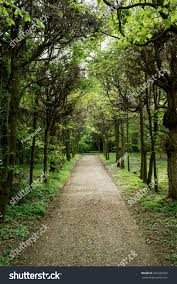 tree alley footpath natural theme stock photo 202226032 shutterstock