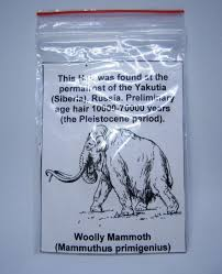 hair woolly mammoth mammuthus primigenius catawiki