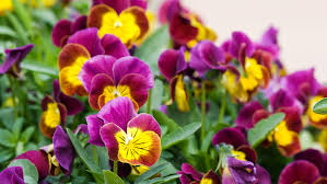 best winter flowers for color sunset