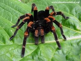 13 best spiders images on pinterest insects spiders and animals