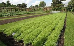 growing vegetables top tips for first time kitchen gardeners