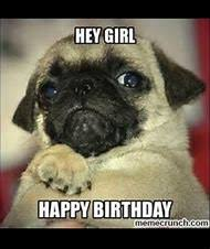 Happy Birthday Pug Meme - best 25 ideas about happy birthday meme find what you ll love