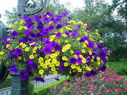 Summer Flowers For Garden - good potted flowers for summer potting soil makes hanging