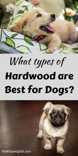 Best Flooring With Dogs Best Hardwood Flooring For Dogs Board And