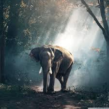 apple wallpaper elephant elephant wildlife 4k hd desktop wallpaper for 4k ultra hd tv