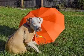 Georgia travel umbrella images Neatpack travel umbrella review waterproof umbrella for travelers jpg