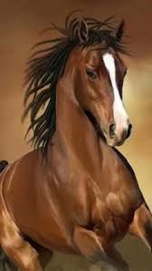 10 gorgeous pictures of horses horses horse and beautiful