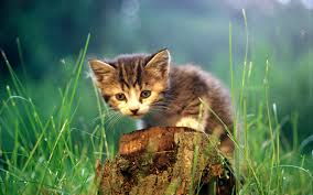 rare cat wallpapers photo collection hdwallpapers cat most rare