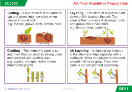 learnhive cbse grade 7 science growth development and