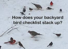 Backyard Birding Magazine Birders How Does Your Backyard Checklist Compare Pennlive Com