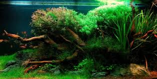 Plants For Aquascaping Aquascaping For Beginners Getting The Basics Right U2013 The Fish Doctor