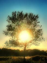a tree on the sun foreverwallpapers