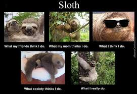 Sloth Asthma Meme - sloth life by recuris meme center