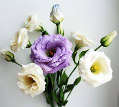 buy eustoma lisianthus bouquet of white and lilac eustoma polymer