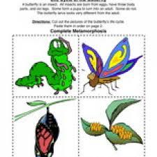 Havefunteaching Com Math Worksheets Butterfly Cycle Worksheet Teaching