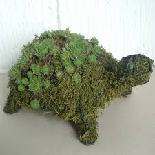 tortoise turtle small mossed u0026 planted topiary frame
