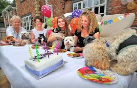 dog birthday party here are the for throwing and attending a dog s birthday