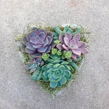 succulent arrangements beautiful succulent arrangements lydi out loud