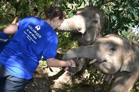 volunteering abroad in thailand everything you need to know