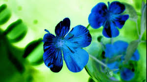 blue flower photo collection preety blue flower