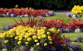 Beauty Garden by Flowers Colors Flower Flowers Spring Garden Beds Beauty