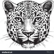 jaguar clipart animal face pencil and in color jaguar clipart