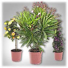 balkon und terrassenpflanzen aldi nord balkon und terrassenpflanzen