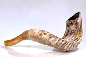 kosher shofar ram shofar horn kosher 10 11 judaica israel made ebay