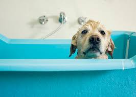 afghan hound dogs 101 dogs 101 bathing your dog dogtime