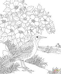 coloring download new york state flower coloring page new york