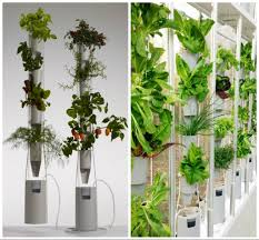 faboulus fresh indoor green wall made from vegetable hydroculture
