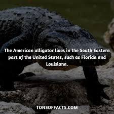 Alligator Meme - alligator chomp funny memes chomp best of the funny meme
